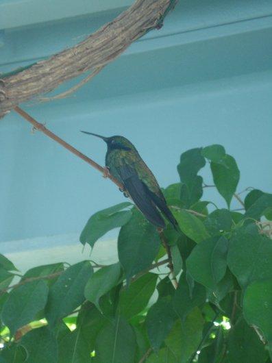 Colibri at GenoaAquarium