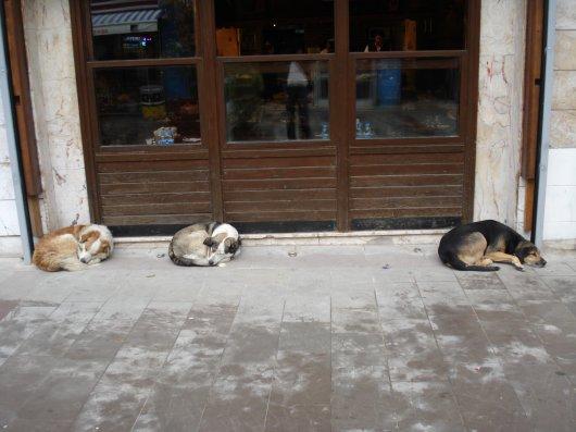 Three dogs taking abreak