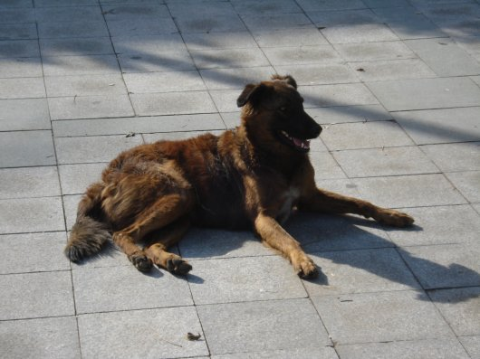Happy dog inHeybeliada