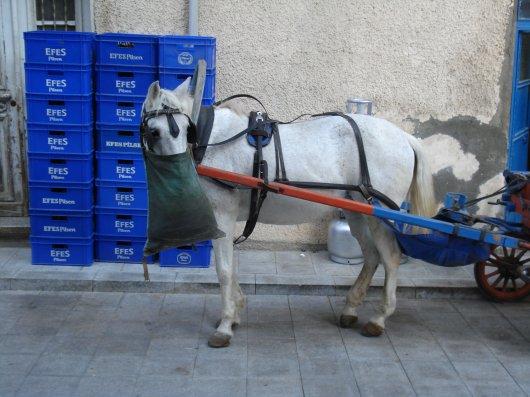 Horse feeding atHeybeliada