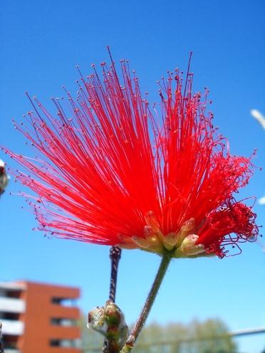 Flower inLisbon