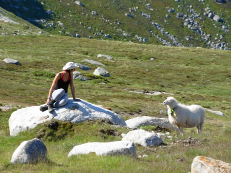 Ellie negotiating with a sheep at Flørli