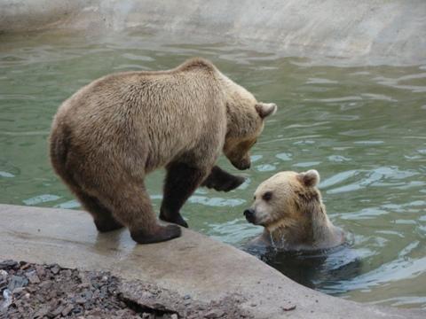 Dry bear wants to tease bear in water...