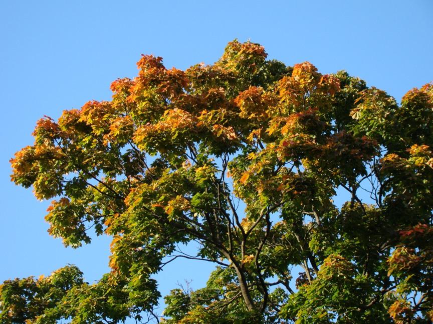 Autumn colours in Kaivopuisto